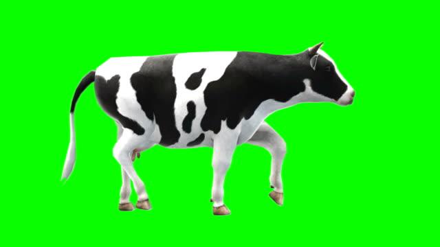 암소 워킹 그린 스크린 (반복 가능) - 암소 스톡 비디오 및 b-롤 화면
