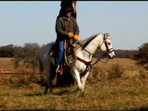 cowboy herding black steer cattle on white horse - nötkreatur bildbanksvideor och videomaterial från bakom kulisserna