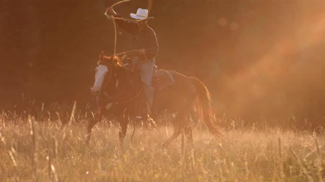 cowboy roping al tramonto, rallentatore - cowboy video stock e b–roll