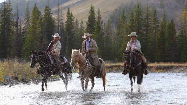 Cowboys and Cowgirl crossing river on horseback  horseback riding stock videos & royalty-free footage