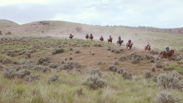 cowboys and cowgirls on horses - cowboy video stock e b–roll