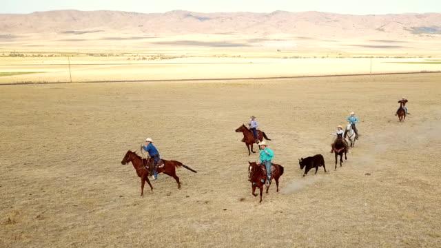 Cowboys herding a bull for branding video