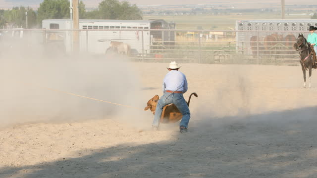 cowboys roping steers at a rodeo - rodeo stock videos and b-roll footage