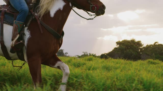 cowgirl galloping - stallone video stock e b–roll