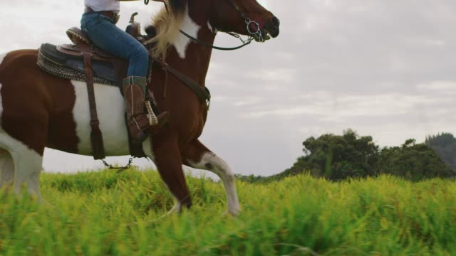 Cowgirl horseback riding Cowgirl horseback riding in green field, brown and white horse cantering with rider cowgirl stock videos & royalty-free footage