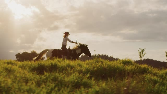 Cowgirl horseback riding Amazing slow motion horseback riding at sunset, cowgirl riding fast through green fields, horse galloping cowgirl stock videos & royalty-free footage