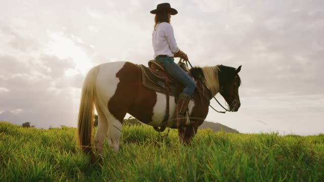 Cowgirl sitting on horse in green field Cowgirl sitting on horse in green fields at sunset, slow motion orbit shot of horseback rider cowgirl stock videos & royalty-free footage