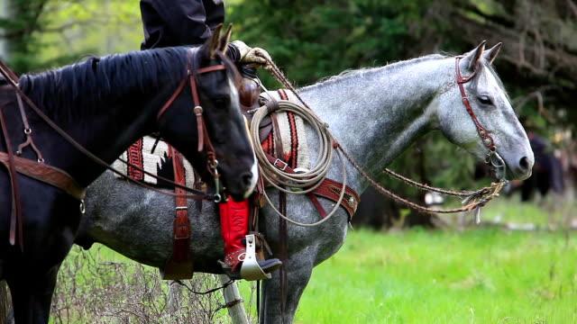Cowgirls on horseback