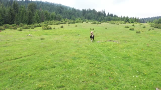 Cows are grazing in the meadow