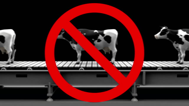 Cows in prohibition sign video