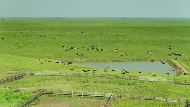 mucche sulla prateria del kansas - aereo - bestiame video stock e b–roll