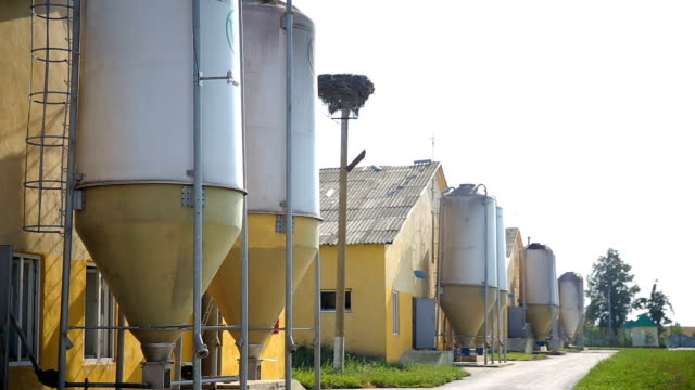 Cowshed and silo on a dairy farm. A farm building in the countryside. Outdoors. Agriculture industry, farming