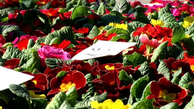 hd :cowslips の市場 - 花市場点の映像素材/bロール