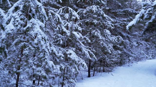 vidéos et rushes de arbres enneigés confortables dans la forêt. 4k - sky