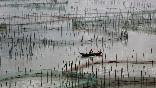 crab aquaculture in Fujian Province, Xiapu city, crab was cultured in the circle fender cage video