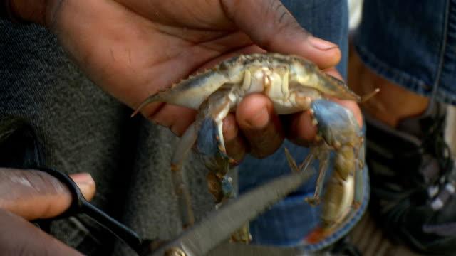 vidéos et rushes de crabe de nettoyage - coquille et coquillage