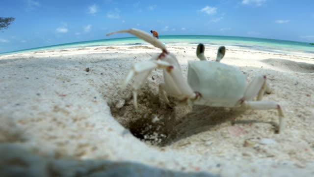 crab coming out of his hole while father and daughter are playing on beach - crostaceo video stock e b–roll