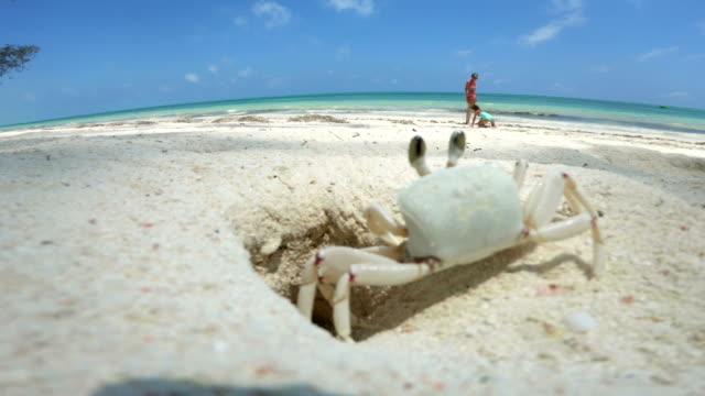 granchio che esce dal suo buco mentre madre e figlia giocano sulla spiaggia - foro video stock e b–roll