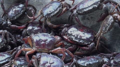 vídeos de stock e filmes b-roll de crab in basket - castanho