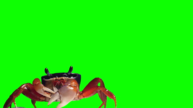crab on a green background - granchio video stock e b–roll