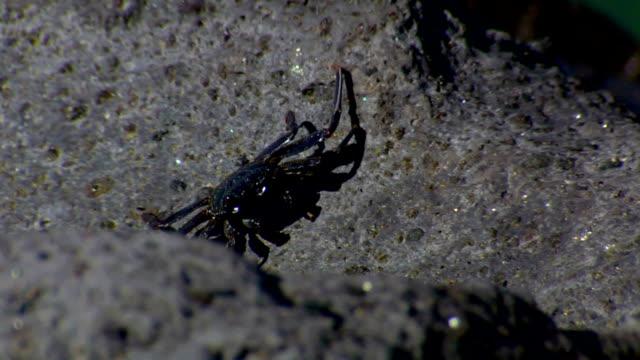 Crab on Rock