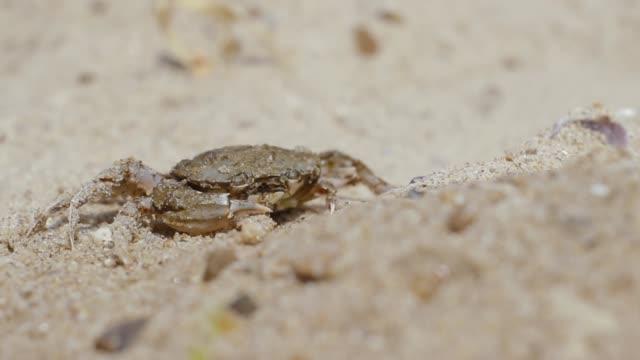 stockvideo's en b-roll-footage met krab op het strand opent grappig zijn mond - baai