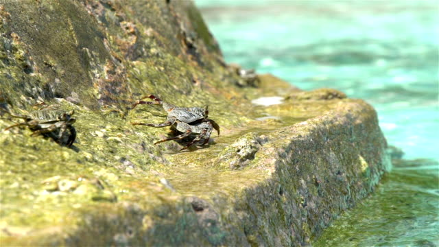 Crabs bask in the sun on a tropical beach. Slow motion. video
