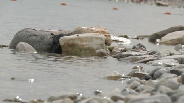 カニはうねる波とビーチで石の上に座る。 - 動物の身体各部点の映像素材/bロール
