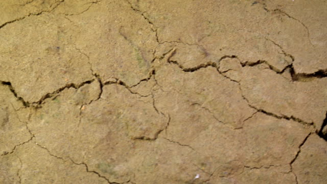 crack growing in shaking ground land destruction Earthquake disaster concept life threat close up background crack growing in shaking ground land destruction Earthquake disaster concept life threat close up background earthquake stock videos & royalty-free footage