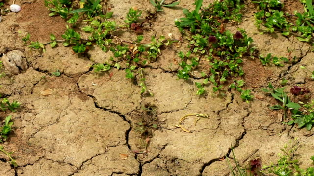 Cracked dry earth video