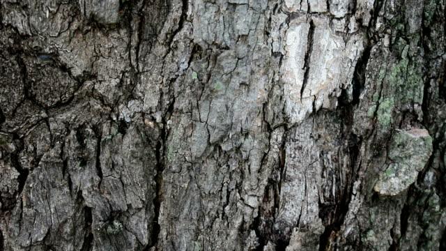 樹皮に亀裂 - 木目点の映像素材/bロール