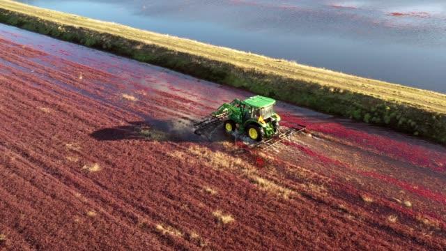 vídeos de stock e filmes b-roll de cranberry bogs in oregon - colher atividade agrícola