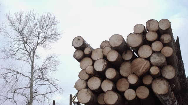 Crane arm lifts up wood logs from truck at sawmill Crane arm lifts up wood logs from truck at sawmill on cloudy cold winter day, slow motion timber stock videos & royalty-free footage