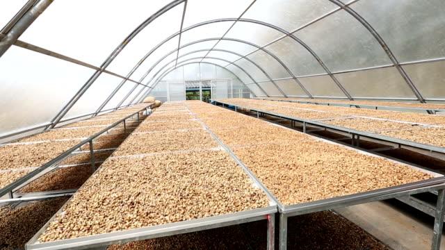 HD crane shot: Coffee beans drying solar plantation house video