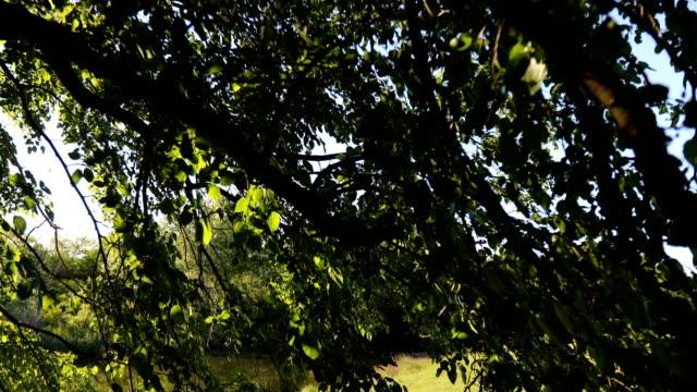 crane shot from a canopy of a tree on a grassy beach by a rural lake - parte della pianta video stock e b–roll