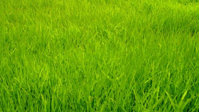 crane shot : grass field video