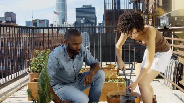 kran-shot des paares pflanzen kräuter auf balkon - urban gardening stock-videos und b-roll-filmmaterial