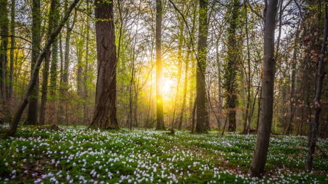 vídeos de stock e filmes b-roll de crane shot of golden sunlight shining through forest - granadilha