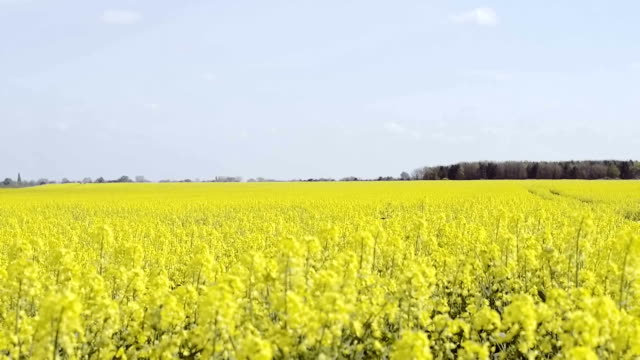 Crane shot over a field in Spring video