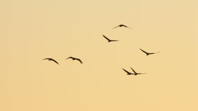 stockvideo's en b-roll-footage met cranes in a sunset - vogel herfst