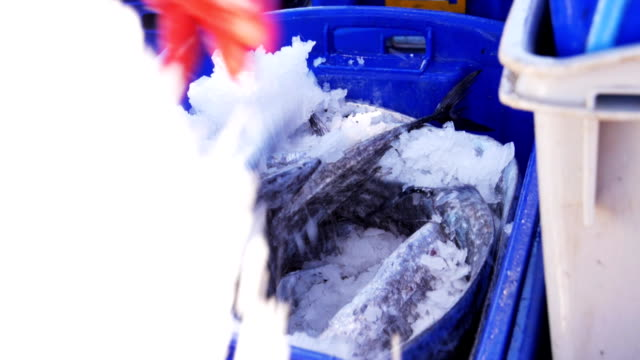 crate of fresh fish - rozładowywać filmów i materiałów b-roll