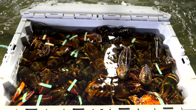 crate of live lobster at a warehouse in portland, maine a crate of live lobster in a holding tank at a wholesalers warehouse in portland, maine storage tank stock videos & royalty-free footage