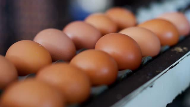 vídeos de stock, filmes e b-roll de caixas de 4k de ovos frescos em uma fazenda de aves domésticas. - ave doméstica