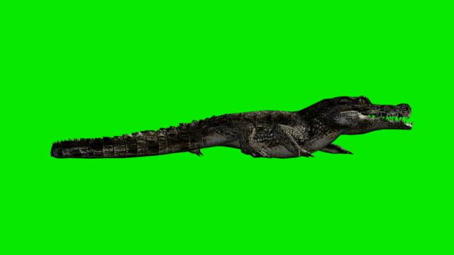 Crawling Crocodile Green Screen (Loopable) video