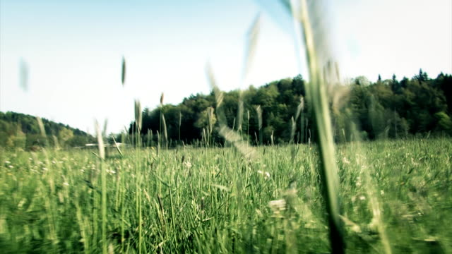 Crawling in the grass Low angle view. short length stock videos & royalty-free footage