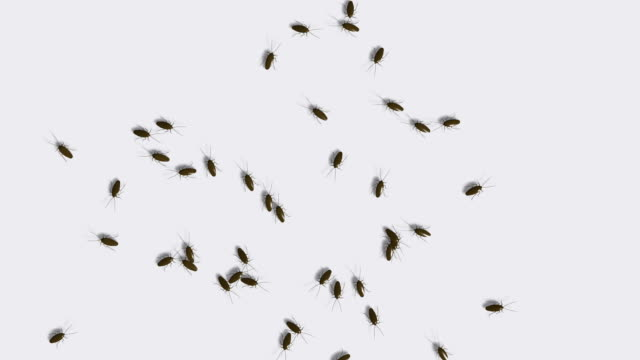 Crawling Insects video