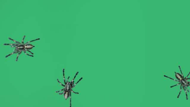 krypande spindlar - spindel arachnid bildbanksvideor och videomaterial från bakom kulisserna