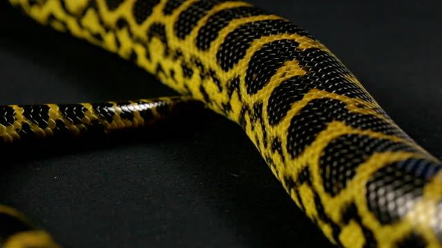 Crawling tail of yellow snake video