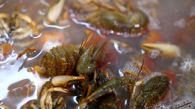 crayfish are cooking - grand opening stock videos and b-roll footage