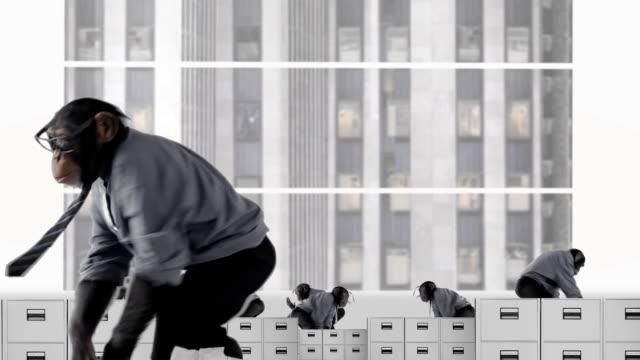 Crazy Monkey Business video